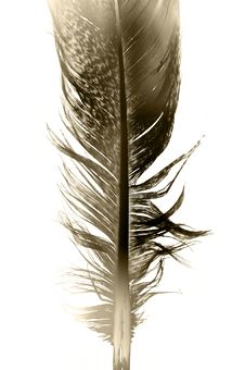 Free Feather Royalty Free Stock Photo - 8794905