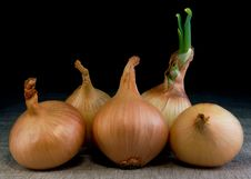 Free Onion Royalty Free Stock Image - 8795006