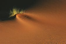 Free Dune Surface. Stock Image - 8796431