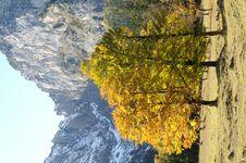 Free Alpine 133 Stock Photo - 8796760
