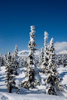 Free Alpine Slope With Pine Tree Stock Photos - 8799033