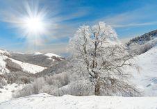 Free Winter Tree Royalty Free Stock Photo - 8799635