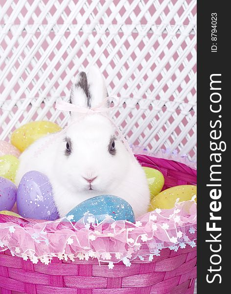 White Rabbit in Easter Basket with Easter Eggs