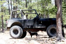 Free Small Dog Lifts Jeep! Stock Photos - 87955863