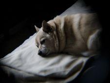 Free Dog, Dog Breed, Felidae, Carnivore Stock Photography - 87955872