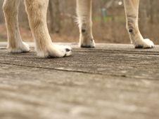 Free Dog, Leg, Wood, Carnivore Royalty Free Stock Photography - 87956077
