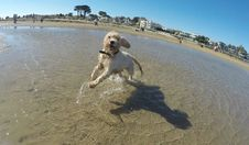Free Maggie At Brighton Dog Beach Royalty Free Stock Images - 87956819