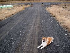 Free Guarding The Driveway Stock Photo - 87957000