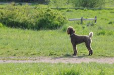 Free Dog Holding Ball Looking Away Royalty Free Stock Images - 87957359