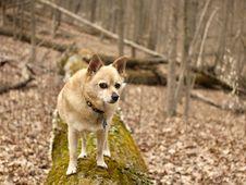 Free Dog, Dog Breed, Carnivore, Companion Dog Stock Photos - 87958213