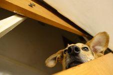 Free Head, Dog, Carnivore, Ear Stock Photos - 87959833