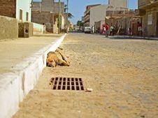 Free Cape Verde Street Dog Royalty Free Stock Image - 87960006