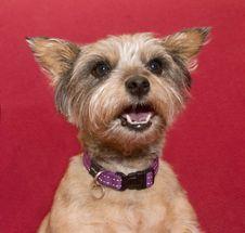 Free Dog, Carnivore, Dog Breed, Collar Stock Photos - 87960143