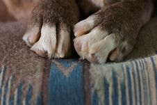 Free Just Be Paws Stock Photos - 87960243