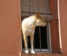 Free How Much Is That Doggy, In The Window... Royalty Free Stock Photos - 87961488