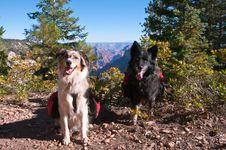 Free Grand Canyon North Rim Royalty Free Stock Photography - 87961997
