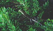 Free Lizard On Green Plant Stock Images - 87965194
