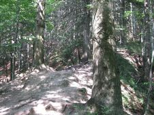 Free Forest Path Royalty Free Stock Photography - 87965817