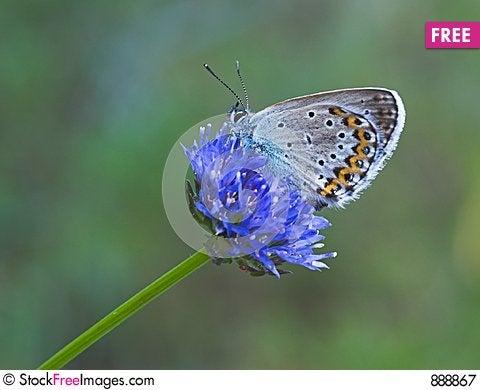 Blue butterfly on blue flower Stock Photo