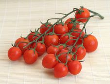 Free Tomatoes Stock Photography - 880772