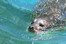Free Seal Stock Photography - 881502