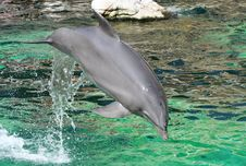 Free Dolphin Royalty Free Stock Photos - 881528