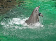 Free Dolphin Stock Photos - 881563