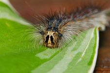 Free Caterpillar Stock Photos - 881613