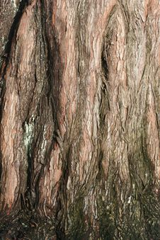 Free Branches Stock Photography - 883112