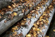 Free Tree Trunk Royalty Free Stock Photo - 883125