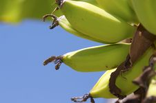 Free Banana Stock Image - 883621
