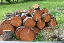 Free Wood Tree Stock Image - 884191