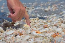 Free Hunting Shells Royalty Free Stock Photos - 884268