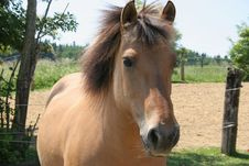 Free Portrait Of A Horse Stock Images - 884394