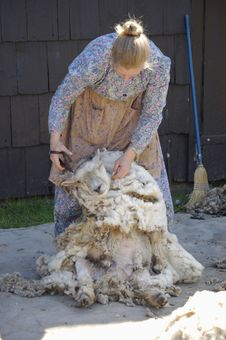 Free Shearing Sheep I Stock Photos - 885013