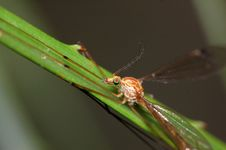 Free Rainbow Eyes - Insect On A Grass Blade 2 Royalty Free Stock Photo - 885345