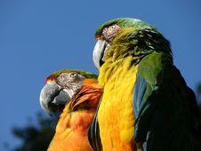 Parrots Stock Images