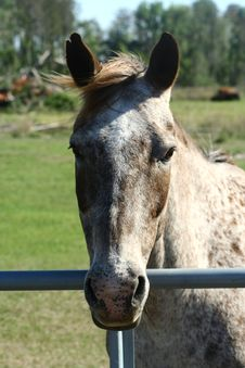 Free Horse Head Stock Photo - 887590