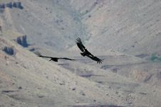 Free Condors Over Grand Canyon Royalty Free Stock Photo - 887665