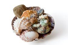 Free Set Of Sea Sheells Royalty Free Stock Images - 887849