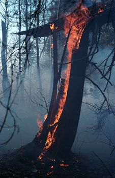 Fire In A Wood. Stock Photo