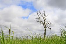 Free Lonely Dry Tree, Cloudy Sky, Grass At Bottom Stock Images - 888684