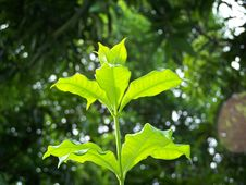Free Green Leaves Stock Photo - 889470