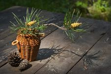 Blossoming Pine-tree Stock Images