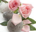 Free Roses And Stones Stock Photo - 8804420