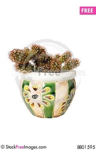 Free Nipple-cactus Royalty Free Stock Photo - 8801595