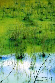 Free A Green Swamp Royalty Free Stock Photos - 8801898
