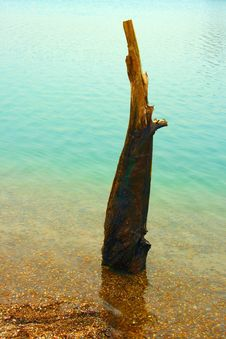 Free B Elements Wood And Water Stock Photos - 8802273