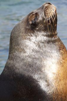Free Sea Lion When Sunbathing Stock Photo - 8803410