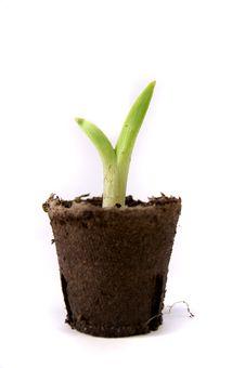 Free Plant Royalty Free Stock Image - 8804356